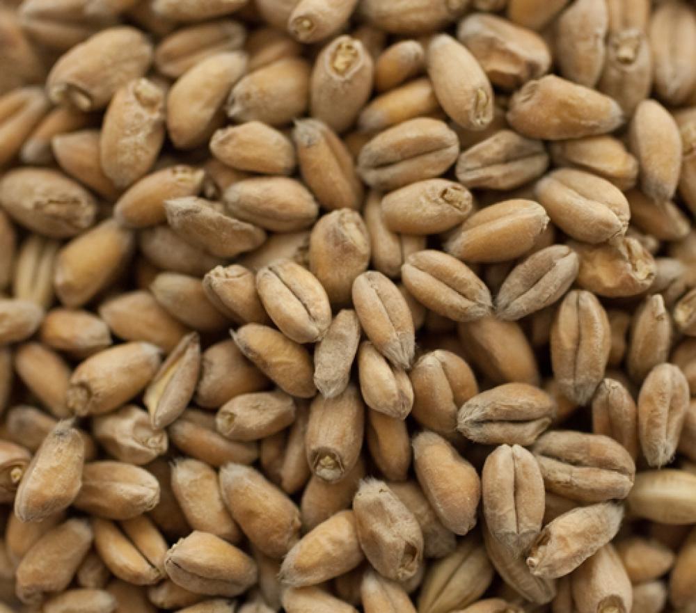 Wheat Malt - THOMAS FAWCETT & SONS (2 lbs)