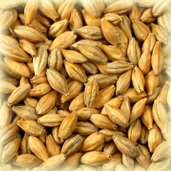 SMOKED Malt - Castle Malting (1 lbs)