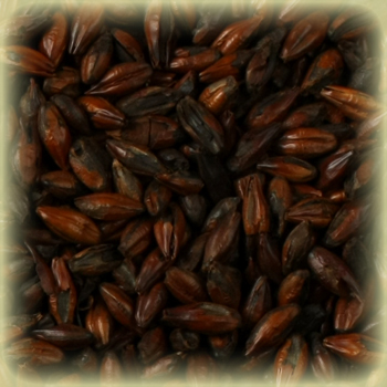 ROASTED BARLEY Malt - Castle Malting (1 lbs)