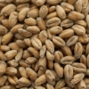 Wheat Malt - THOMAS FAWCETT & SONS (2 lbs)