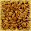 CARA GOLD Malt - Castle Malting (1 lbs)
