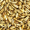 Oat Malt - Castle Malting (1 lbs)