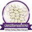 Phyteney ไฟทินี่ ผลิตภัณฑ์ ลดน้ำหนัก ลดความอ้วน ตัวช่วยควบคุมน้ำหนัก thumbnail 12