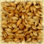 CARA BLOND Malt - Castle Malting (1 lbs) thumbnail 1