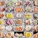 LITHOPS - karasmontana Mix (20 seeds)